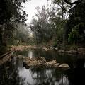 Eungella National Park - Wasserstelle direkt beim Fern Flat Campground am Morgen früh