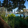 Lavender Bay - Wendy's Secret Garden