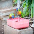 Gemseeker Caravan Park - viele Tiere hat es hier!