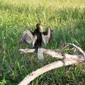 Tiere im Kakadu National Park