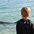 Die Delphine von Monkey Mia