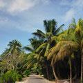 Unterwegs auf La Digue (Inselinneres)