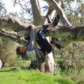 im Park hinter dem Barossa Valley Tourist Park