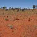 Unterwegs Richtung Uluru - Rote Sanddüne beim Lake Alexander