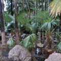 Zebedee Hot Springs