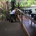 Kuranda - ein Lizard vor der Linse