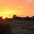 Sonnenaufgang Spencer Gulf