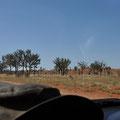 Auf dem Lasseter Highway