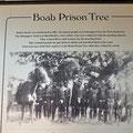 Boab Gefängnisbaum