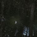 Eungella NPational Park - Fluss direkt beim Campground - na, wen haben wir denn hier?!?