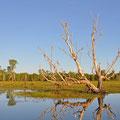 Kakadu National Park - Yellow Water Lagoon