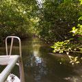 Solar Whisperer Daintree River Crocodile Tour