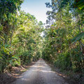 Strasse durch den Djiru National Park direkt bei Mission Beach
