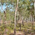 Landschaft im Kakadu National Park