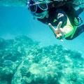 Schnorchel-Tour mit 'Ocean Safari', Cape Tribulation