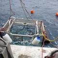 Shark-Cage-Diving-Tour - Der Käfig