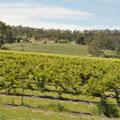 Weinregion - Claire Valley