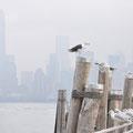 Auf Liberty Island - Skyline im Hintergrund