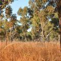 Kimberley-Landschaft