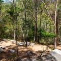 Mount Coot-tha - Simpson Falls Track