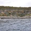Shark-Cage-Diving-Tour - Küste vor Port Lincoln National Park