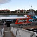 Shark-Cage-Diving-Tour - Unser Schiff
