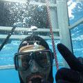 Shark-Cage-Diving-Tour - Im Käfig