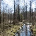 Immer wieder Sumpfgebiete über viele Kilometer.