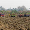 Die Maniok-Ernte ist in vollem Gange. Harte Knochenarbeit.