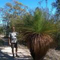 Viele Pflanzen und Tiere kommen nur auf Tasmanien vor.