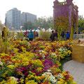 Nahe der City Hall in Seoul ist immer etwas los. An diesem Wochenende ein Blumenfestival.
