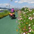 In Stadtnähe säumen viele Blumen den Radweg.