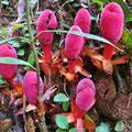 Immer wieder finden wir spezielle Farbtupfer im Regenwald.