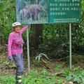 Frei lebende Elefanten sehen wir im Elefantental leider keine.