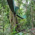 Bei trockenem Wetter kann man auf Hängebrücken durch den Wald turnen.