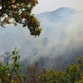 Auf dem Weg nach Mandalay sehen wir diverse Waldbrände, einige direkt an der Strasse.