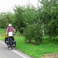 Rund um Nagano gibt es grosse Obstplantagen.