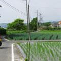 Das Treten auf kleinen und kleinsten Strassen und Wegen am Lake Biwako ist sehr angenehm.