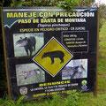 Der Tapir ist ein nachtaktives Tier und ein Einzelgänger. Wir haben kaum eine Chance einen zu sehen.