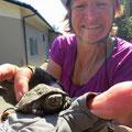 Eine junge Sumpfschildkröte mitten auf der Strasse.