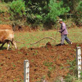 Die kleinen Felder können nicht mit Maschinen bewirtschaftet werden.