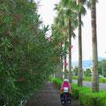 Uns gefällt das südliche Flair mit Palmen und blühendem Oleander.