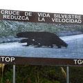 Es gibt u.a. Bären im Parque National Podocarpus.