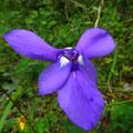 Jeden Tag entdecken wir neue, wunderschöne Blumen.