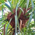 Ameisen haben ein Nest gebaut.