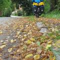Der Herbst ist da . . .