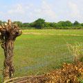 Kolumbien kann seinen ganzen Reisbedarf selber decken.