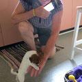 Miss Bell, sieben Wochen alt.