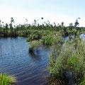 Der Wilderness Trail führt auch durch Sümpfe.