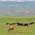 Wir können bis nach Südossetien sehen.